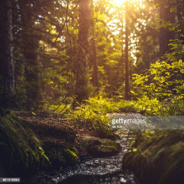 river in the forest at sunset - spring flowing water stock pictures, royalty-free photos & images