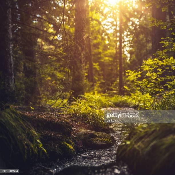 rio na floresta ao pôr do sol - fonte - fotografias e filmes do acervo