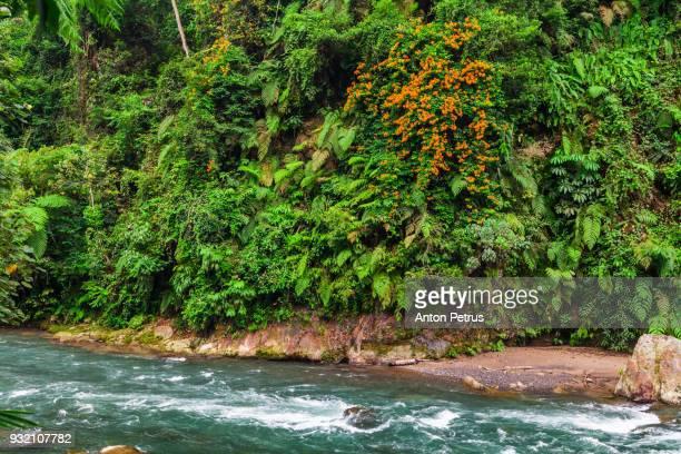 River in the jungle. Sumatra, Indonesia