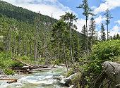 river woods tatra mountain poland