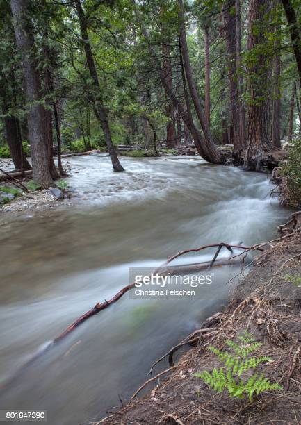 river in yosemite valley, long exposure - christina felschen - fotografias e filmes do acervo