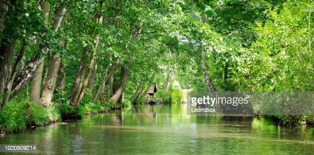 river landscape in the spreewald, southeast of the state of brandenburg, germany - spree river stock pictures, royalty-free photos & images