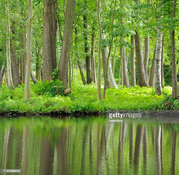 River landscape in the Spreewald, southeast of the state of Brandenburg, Germany