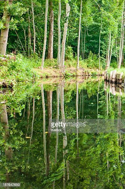 river Landschaft mit grünen Wald im Spreewald/Deutschland