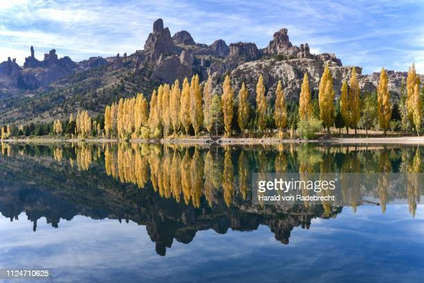 river limay with poplars in autumn colour at bariloche, ruta 40, patagonia, argentina - bariloche stock pictures, royalty-free photos & images