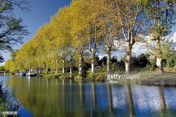 river lined by trees, canal du midi, la redorte, aude, france - canal du midi photos et images de collection