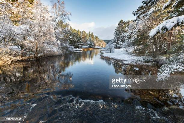 River Luineag flowing into Loch Morlich in the Cairngorms National Park of Scotland.