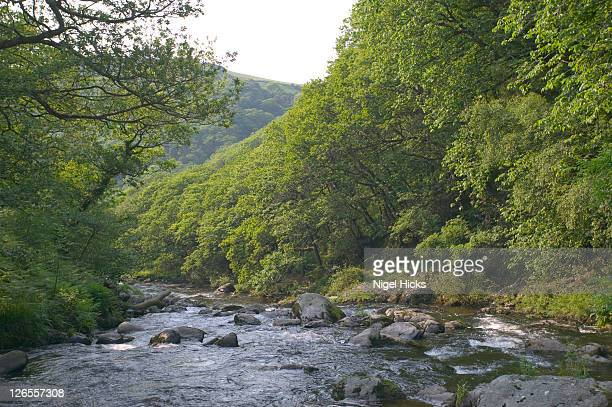 River Lyn flowing through the wooded gorge at Watersmeet in Exmoor National Park, one of the largest areas of ancient oak woodland in southwest England
