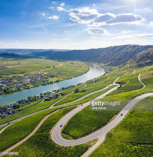 river moselle (mosel) at piesport - moselle stock pictures, royalty-free photos & images