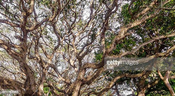 river oaks - vero beach stock pictures, royalty-free photos & images