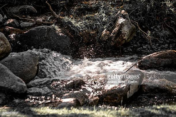 river passing through a forest - andres ruffo stock pictures, royalty-free photos & images