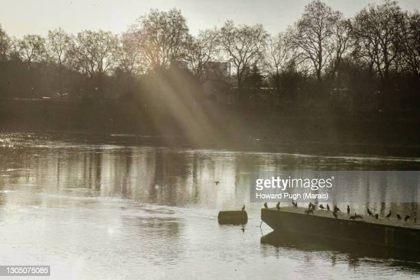 river rays - howard pugh stock pictures, royalty-free photos & images
