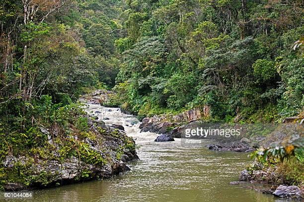River running through tropical rainforest of the Ranomafana National Park Haute Matsiatra Madagascar Southeast Africa