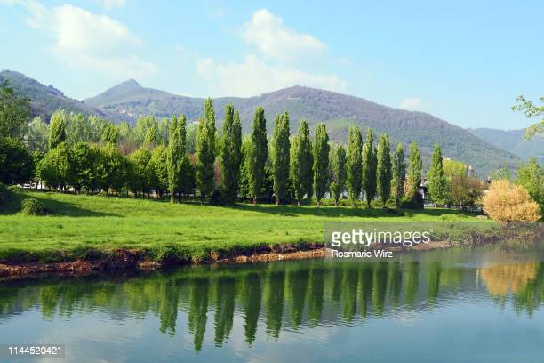 river serio lined by poplar trees, reflecting - bergamo stock pictures, royalty-free photos & images