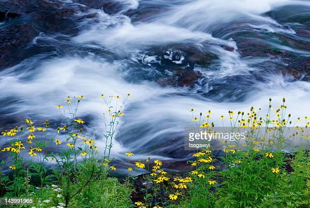 river side - isogawyi stock pictures, royalty-free photos & images