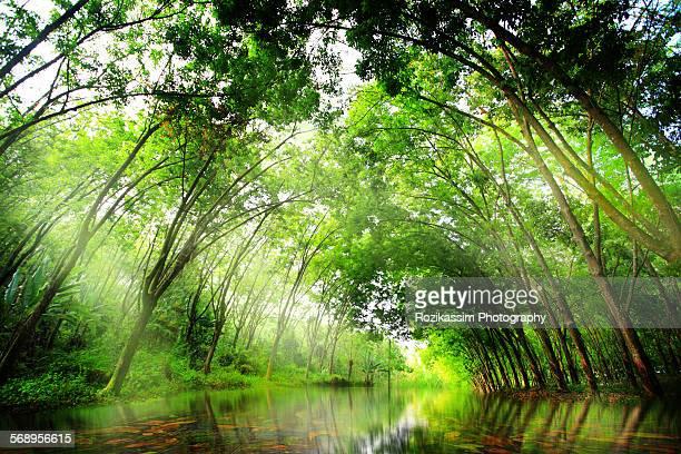 River through a rubber plantation