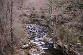 stream flowing through woods north corsica