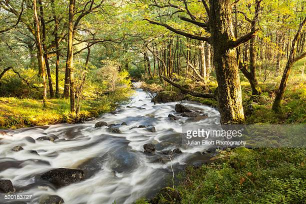 a river through woodland near loch trool - dumfries and galloway stock pictures, royalty-free photos & images