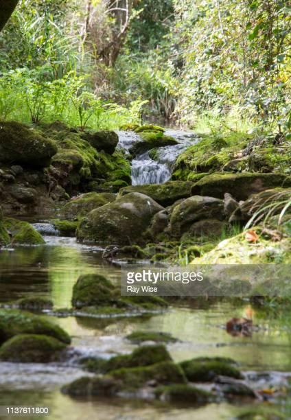 river walk - sintra, portugal - quinta da regaleira photos stock pictures, royalty-free photos & images