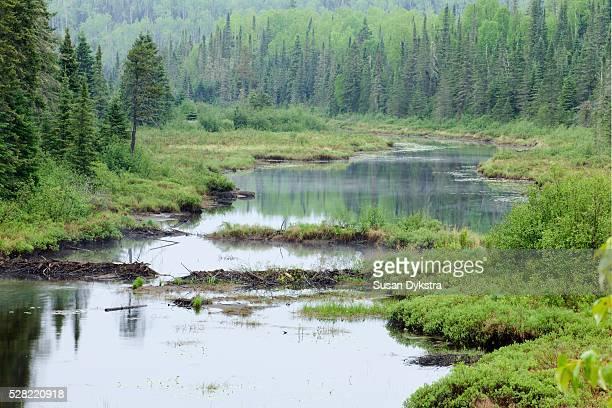 River with a beaver dam