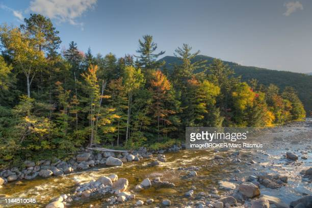 river with autumn forest, near lincoln, new hampshire, usa - lincoln nebraska stock pictures, royalty-free photos & images