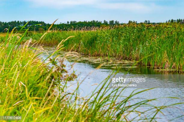 river with banks overgrown with reeds