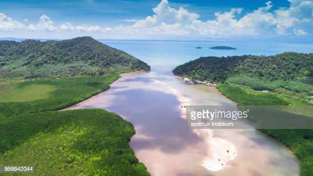 River with sand barrier in mangrove forest at ebb tide time