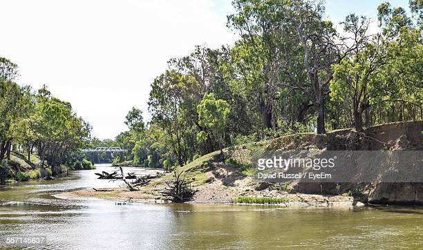 river with wooded banks - dubbo australia stock pictures, royalty-free photos & images