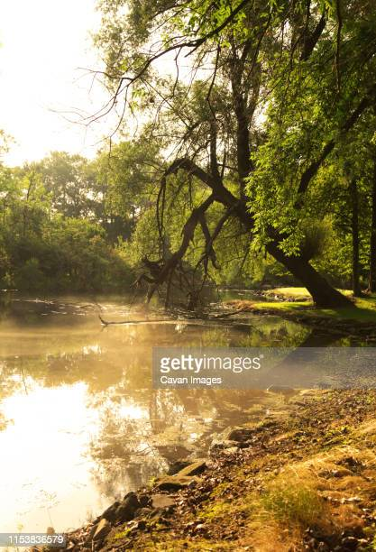 rivers edge summer heat - riverbank stock pictures, royalty-free photos & images