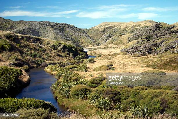 Riverscape, Kahurangi National Park, Golden Bay, NZ