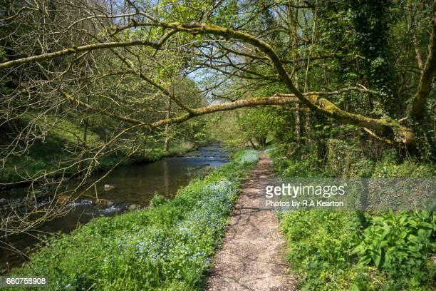 Riverside path in spring sunshine