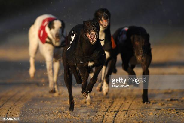 Riverside Prince wins the fourth race at the Coral Brighton and Hove Greyhound Stadium on January 10 2018 in Brighton England