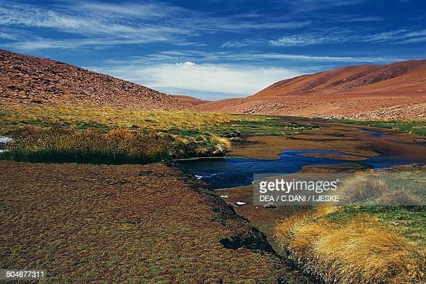 Riverside vegetation Rio Putana Atacama Desert Antofagasta Region Chile