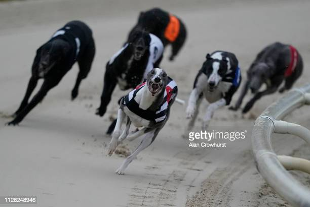 Riviera Diva round the last bend to win the A2 graded race over 515m at Coral Brighton and Hove Greyhound Stadium on February 08, 2019 in Brighton,...