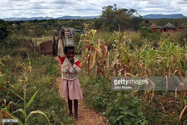 Rivonia age 7 pauses in a cornfield on her family's sustinance farm March 22 2008 in the small village of Nhekiyana in central Zimbabwe With the...