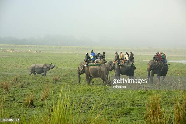 rlephants and rhino - kaziranga national park stock pictures, royalty-free photos & images