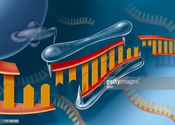 Rna Interference Gene Expression Silencing In The Framework Of The Development Of New Therapies
