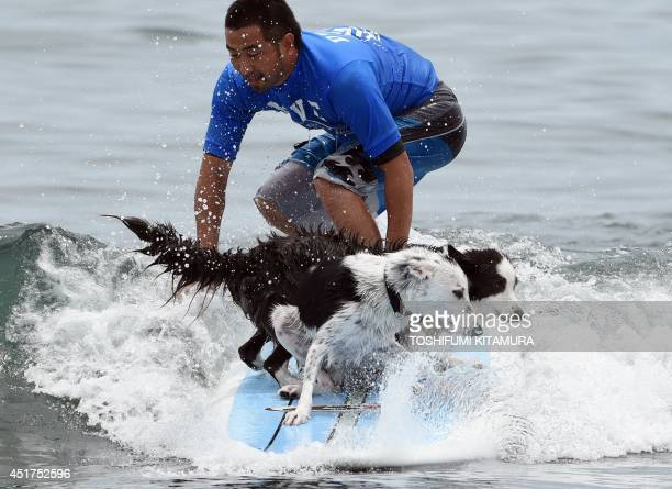 Roa and Vivi and owner Daisuke Nonaka ride on a wave during the animal surfing portion of the Mabo Royal Kj Cup surfing contest at Tsujido beach in...