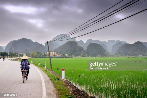 road along rice fields towards the karst rocks of tam coc, ninh binh - bernd schunack stock-fotos und bilder