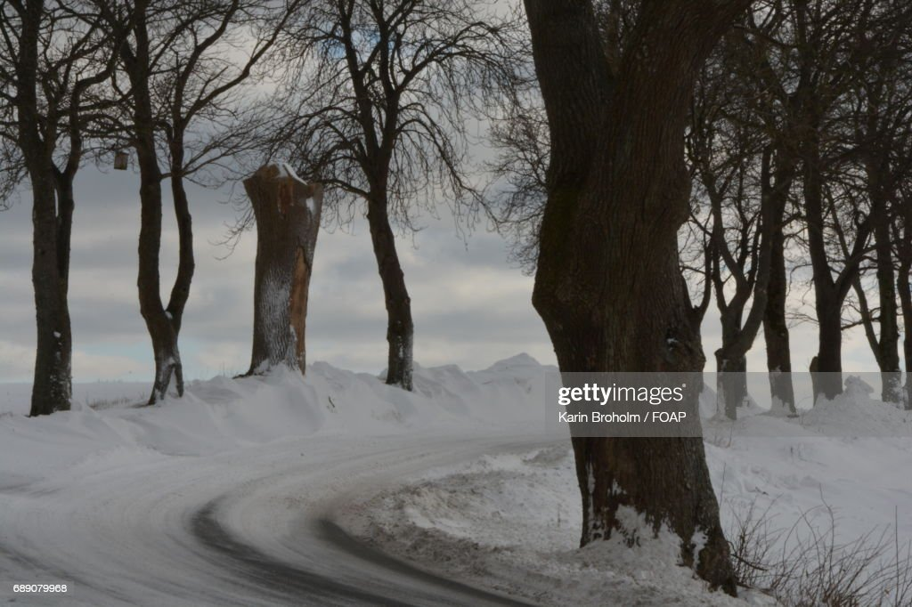 Road along with bare tree : Stock Photo