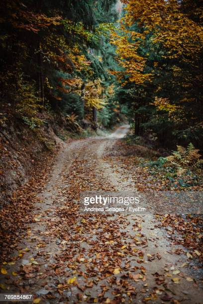 Road Amidst Autumn Leaves In Forest