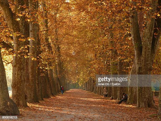 road amidst autumn trees - avenue stock pictures, royalty-free photos & images