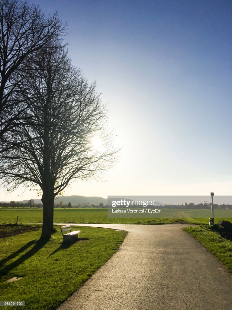 Road Amidst Bare Trees Against Clear Sky : Stock-Foto