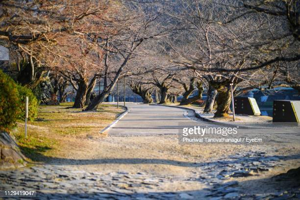 road amidst bare trees in city during winter - 並木 ストックフォトと画像