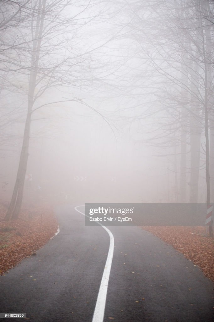 Road Amidst Bare Trees In Foggy Weather : Stock Photo