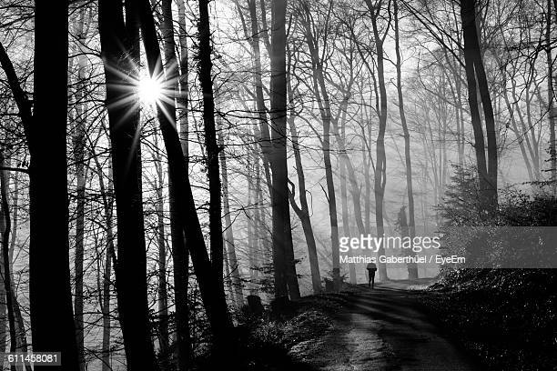 road amidst bare trees in forest - matthias gaberthüel stock pictures, royalty-free photos & images