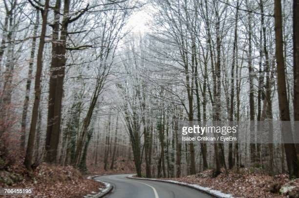 Road Amidst Bare Trees In Forest