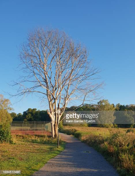 road amidst bare trees on field against clear blue sky - karin garcia eyeem stock pictures, royalty-free photos & images