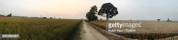 road amidst field against sky during sunset - punjab india stock pictures, royalty-free photos & images
