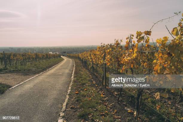 road amidst field against sky - albrecht schlotter stock photos and pictures